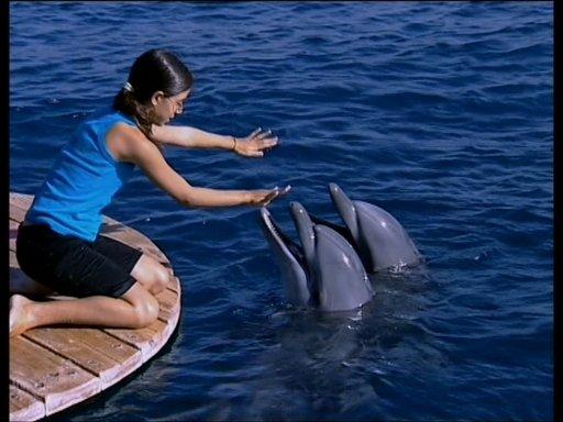 Imagen de Salvemos a los delfines