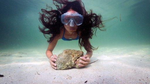 Imagen de Mi tortuga marina