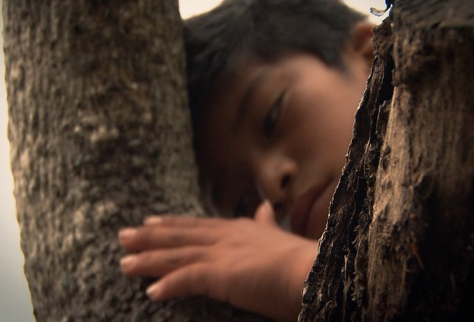 Imagen de El árbol