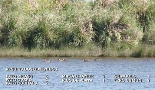 Imagen de Aves acuáticas de Mar Chiquita