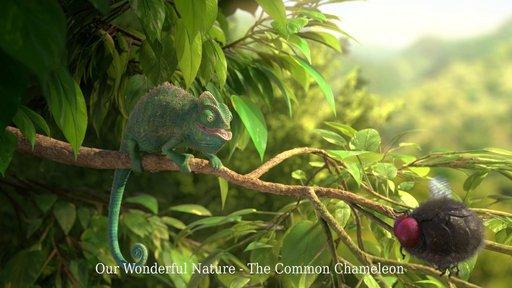 Imagen de Nuestra maravillosa naturaleza- El común camaleón